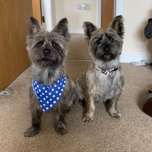 Seans Finn And Dougie Looking Very Smart