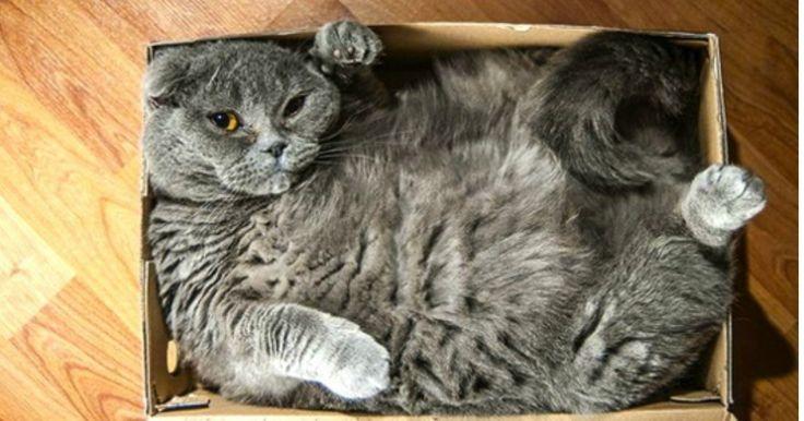5 trucchi e consigli per superare al meglio il trasloco con un gatto