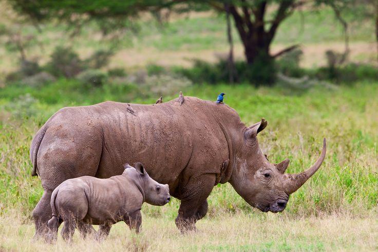 A picture depicting why we do what we do!  www.youthrhinosummit.com #RhinoSummit2014 #rhino #wildlife #nature