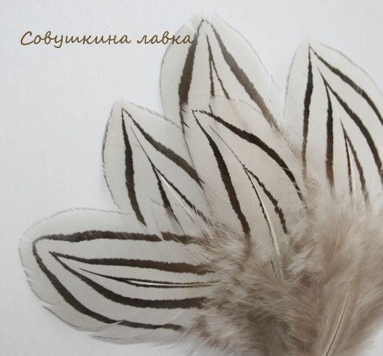 Купить Перья серебряного фазана - перья, перья фазана, перья птиц, Перья для декора