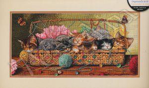 35184 - Новорожденные котята