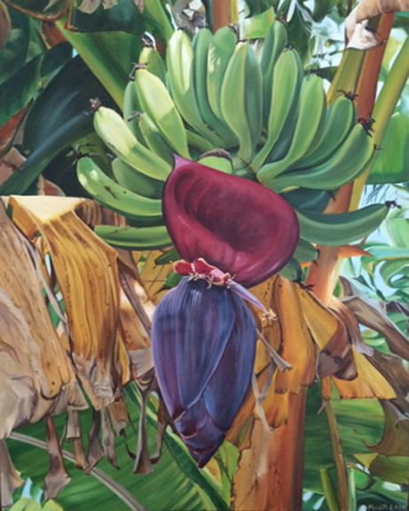 """""""Banana Bloom"""" I saw this beautiful banana tree with bananas and bloom while walking in Florida. I loved the contrast between the dying leaf and new bananas on the same tree."""