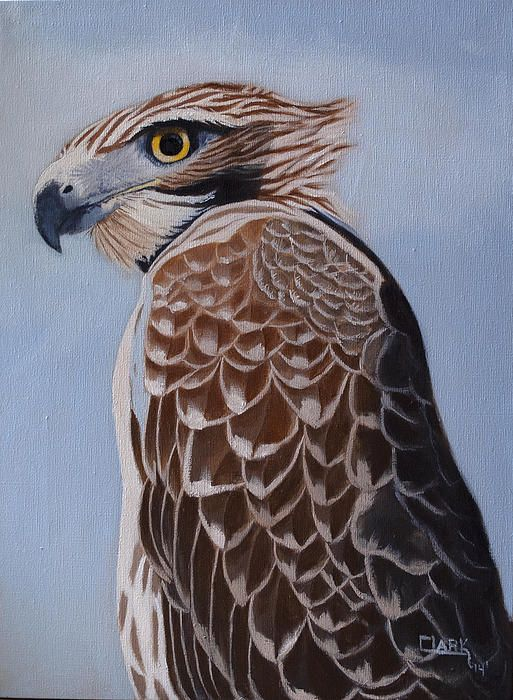 First oil painting of the year Redtail portrait