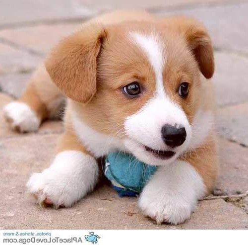 CuteSmallFluffyDogs Cute Small