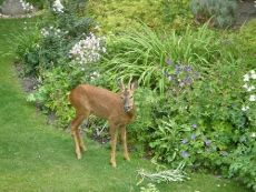 Deer Resistant Plant List – Learn About Plants That Are Deer Resistant