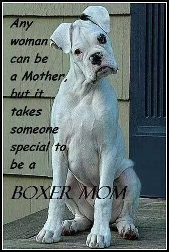 Boxer mom/ My Dancer has changed me , she made my life better , bigger and happier.  I don't know if I'm her Mom or she's mine.