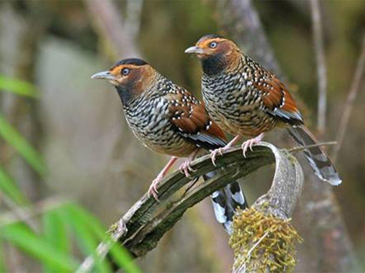 Flora and Fauna of Assam, India @ Sanctuariesindia.com