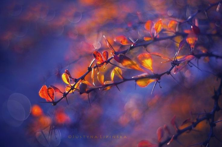 Magic Autumn by Justine1985  #PolskaMalowana #fotografia #photography #autumn #fall #jesień #liść #liście #leaf #leaves #nature #natura
