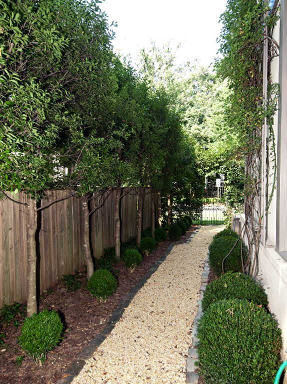 Perfectly manicured and landscaped side yard via Cote de Texas