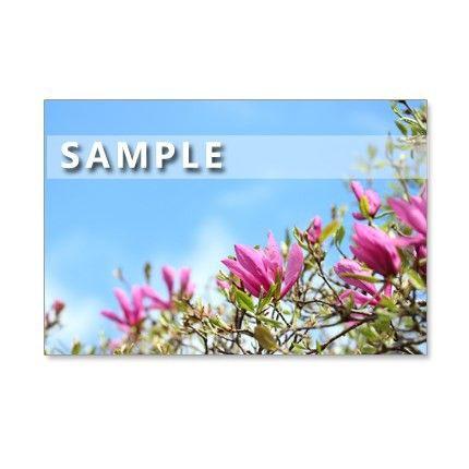 春早い時期に咲く花。マグノリア、椿、ハーデンベルギア。すべて屋外で撮影した花たちです。113-1)明るい紫色のマグノリア「ジュディー」。青空を背景にして。 横...|ハンドメイド、手作り、手仕事品の通販・販売・購入ならCreema。
