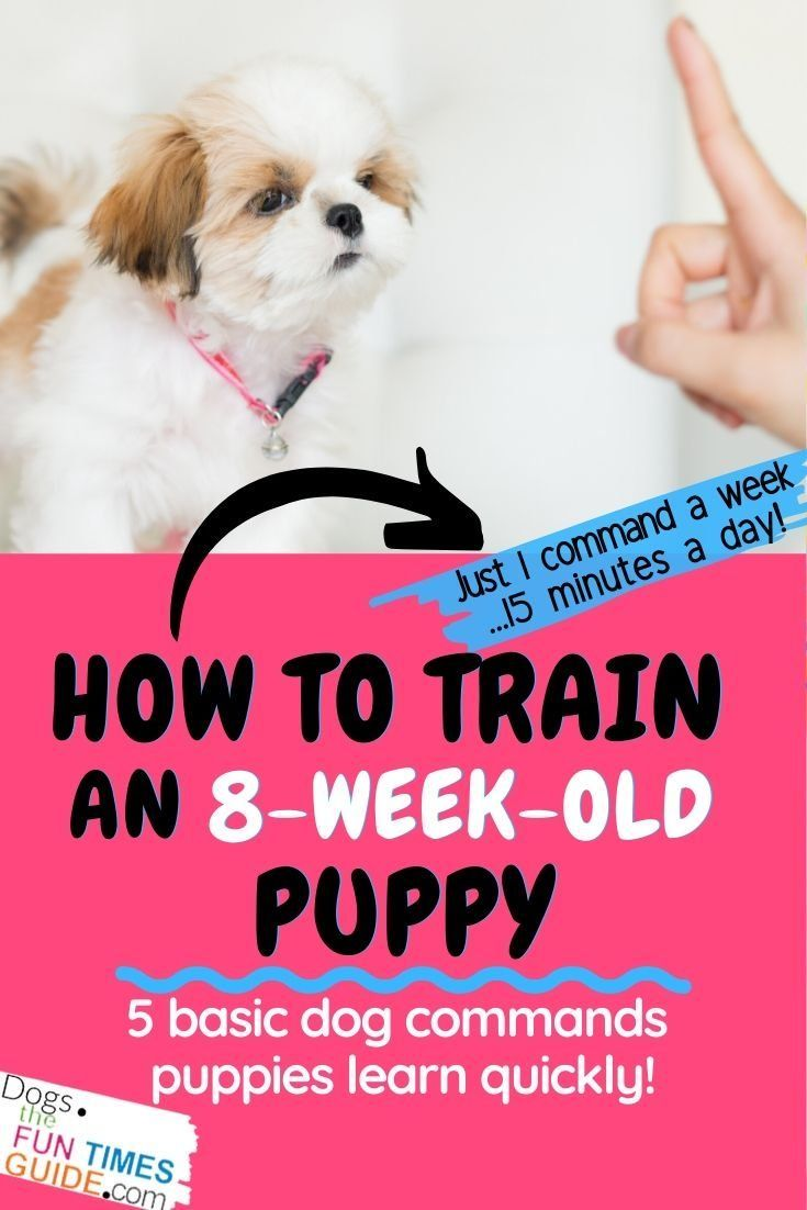 Pin On Funtimesguide Dog Tips