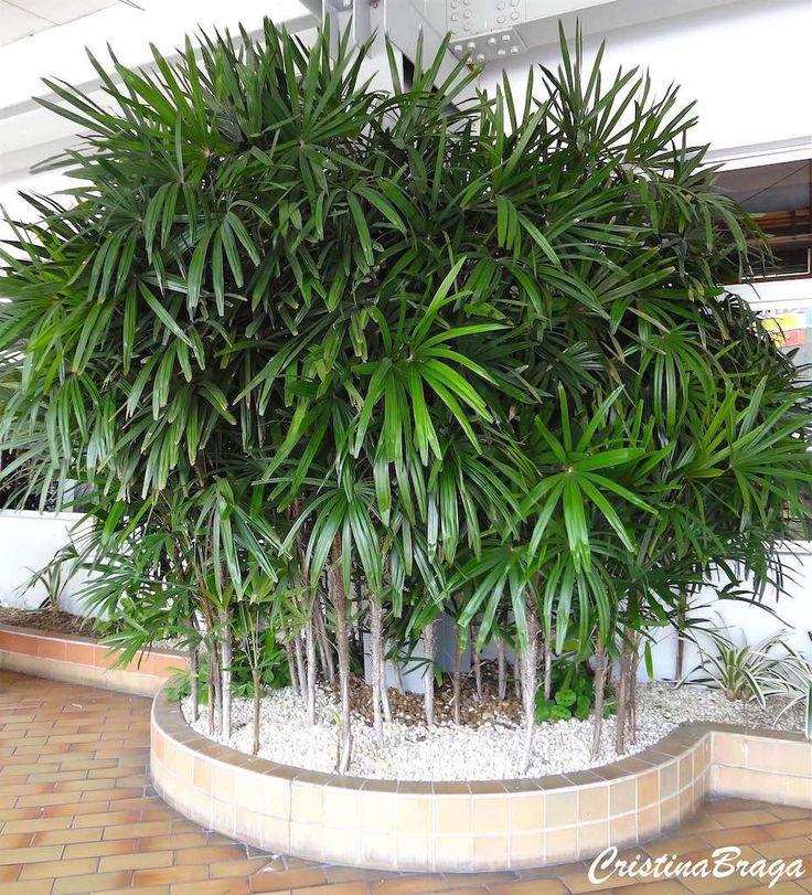 814 best plantas para interiores meia sombra e sombra - Plantas de sombra ...