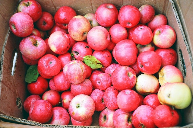 pink lady apples are the best apples.