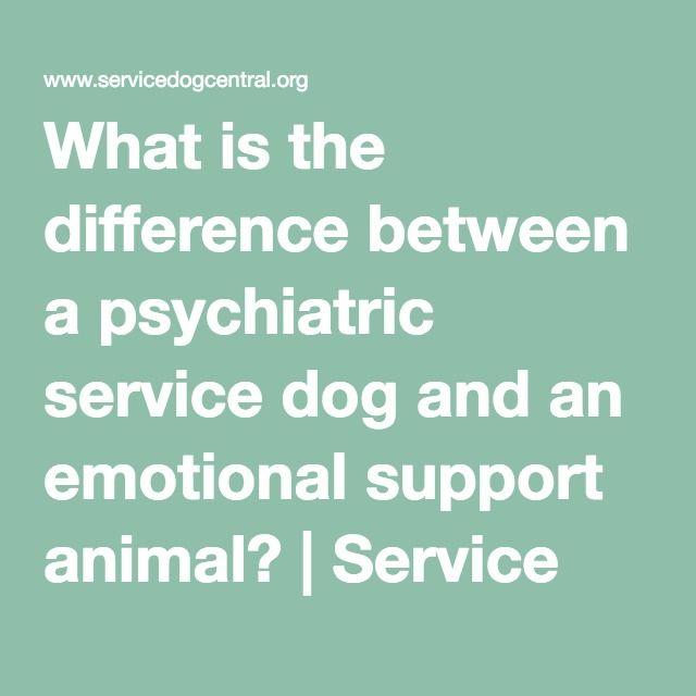 Best 25+ Emotional support animal ideas on Pinterest