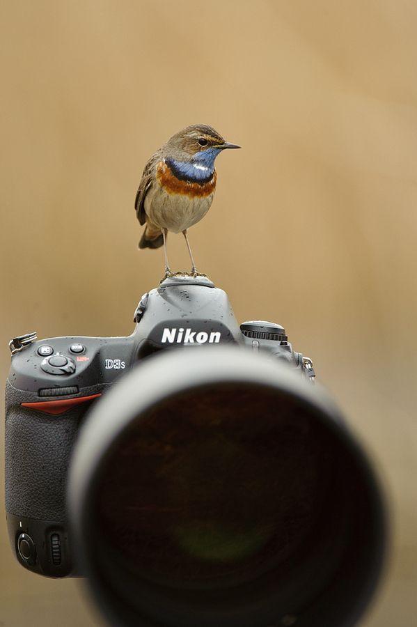 Everyone loves a Nikon... by Edwin Kats