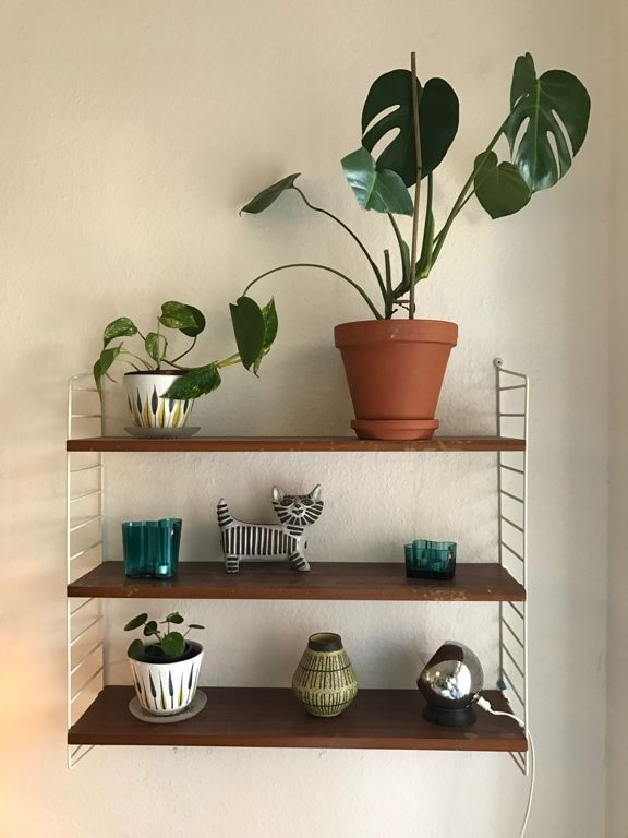Die 25+ Besten Ideen Zu Schöne Zimmerpflanzen Auf Pinterest ... Sukkulenten In Korkstopsel Anlegen Eine Tolle Deko Idee