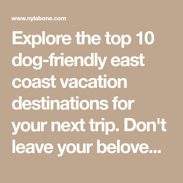 Explore The Top 10 Dog Friendly East Coast Vacation Destinations For