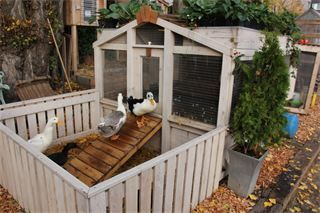 I'm brewing an idea for a duck house over the pond with plants on top now... And that's not even getting into thinking about putting a hoop house over part of the pond for more aquaponics!  PORTAGE BAY GRANGE - **Duck-a-Ponics! - Seattle, WA
