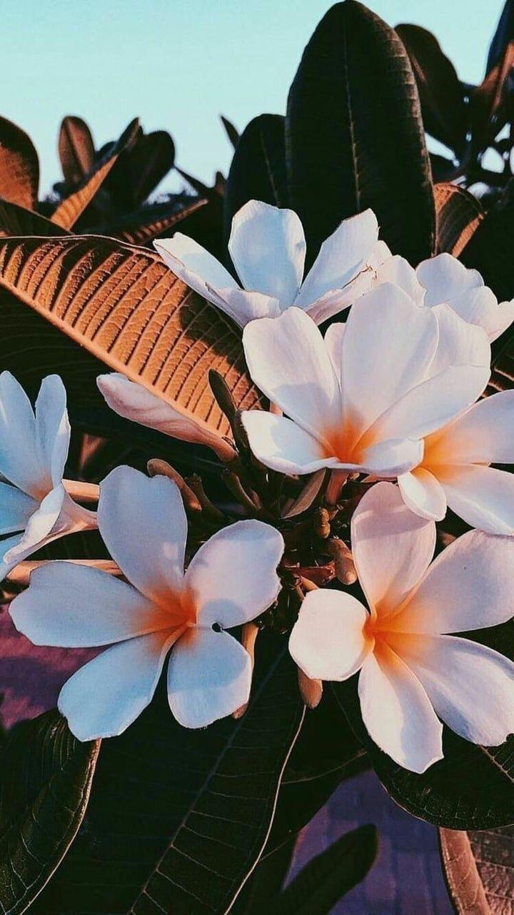 #flowers #summer #background #plants #aesthetics w…