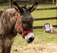 Senzational - Azi a aparut Google Translate pentru animale