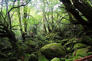Yakushima Travel Guide