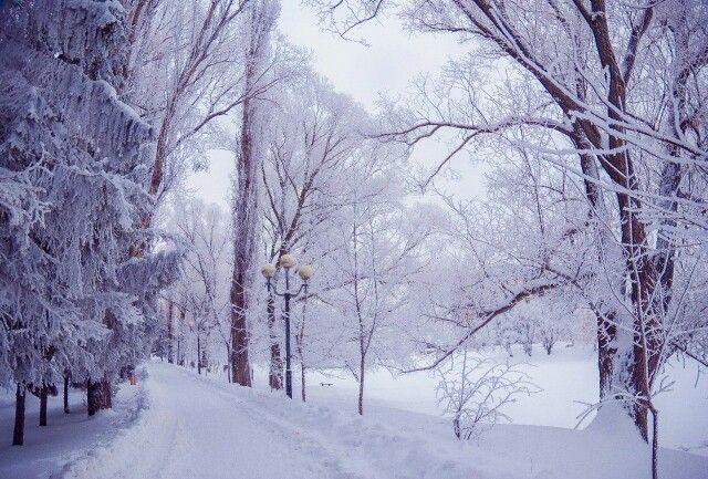 Чудесная январская погода в Белом городе.  Фото: Сергей Бутко