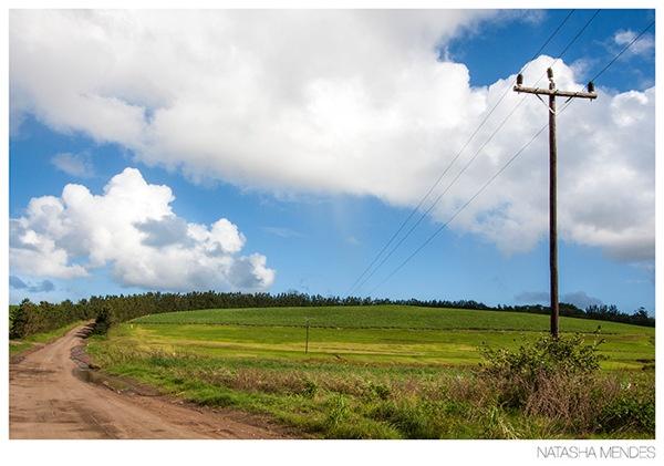 Landscape Portfolio by Natasha Mendes, via Behance