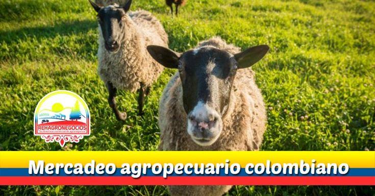 Mercadeo agropecuario colombiano  Si hablamos de mercadeo agropecuario,diremos que Colombia es uno de los países latinoamericanos con mayor optimismo económico en el mercadeo agropecuario, funcionando con 32 departamentos (estados, provincias, comunas, etc.) ha calado a nivel i...  https://goo.gl/tpyFZo  Suscríbete para recibir nuestros correos informativos 👉 http://eepurl.com/c2N6Gn 👈