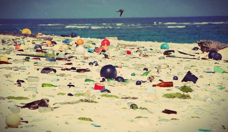 Береговая линия острова Хендерсон покрыта мусором.
