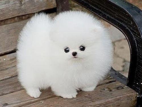 cute little dog It looks like my pillow