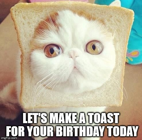 Cat Meme Birthday