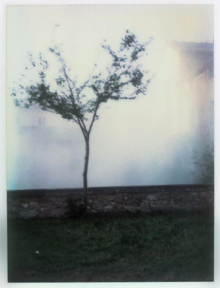Polaroid by Andrei Tarkovsky Lot 1 - Polaroid 3