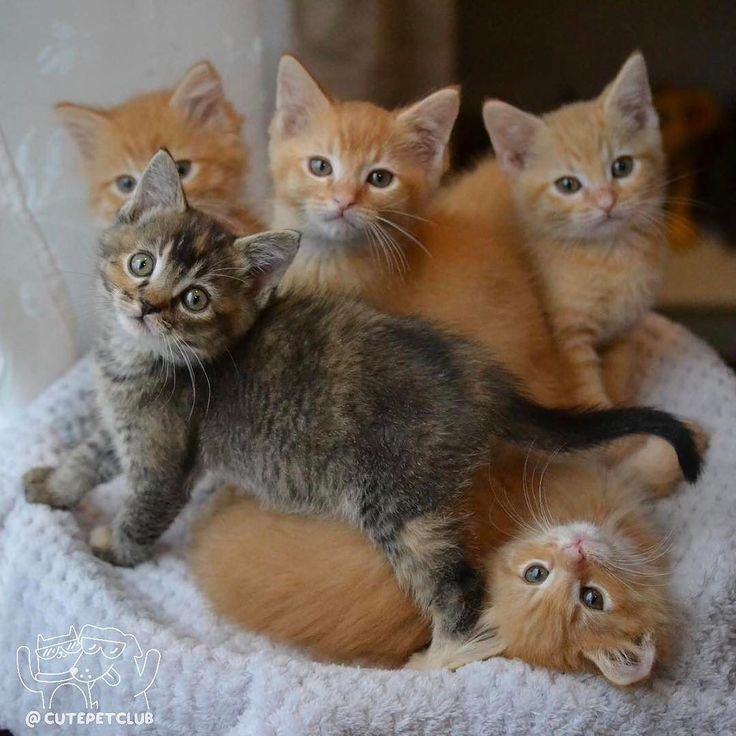 Cutest Baby Kittens Ever | www.pixshark.com - Images ...