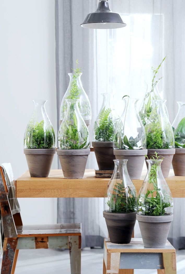 67 best \Fougères images on Pinterest Ferns, House plants and - hygrometrie ideale dans une maison