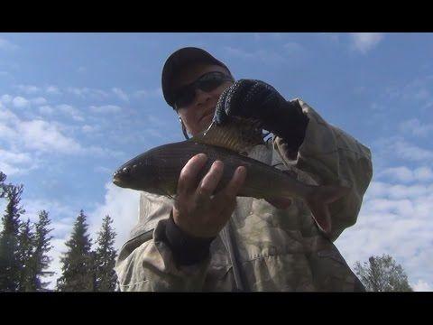 Рыбалка в девственной тайге 2016 ловля хариуса Охота Сибирь медведь грибы