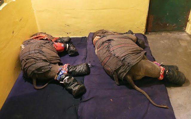 Nikolnews: Πώς βάζεις δύο ελεφαντάκια για ύπνο