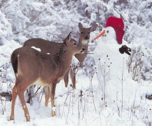 Snowman and fawns