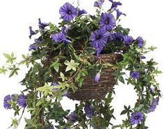 Sweet artificial hanging basket with morning glory flowers and foliage.