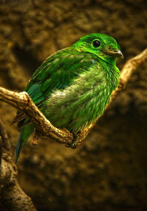 Je suis passionnée par les animaux en général  et plus particulièrement par les chats et les oiseaux. J'adore la nature, les paysages, les découvertes, les jeux de couleurs et de lumière, bref, j'aime les jolies choses...
