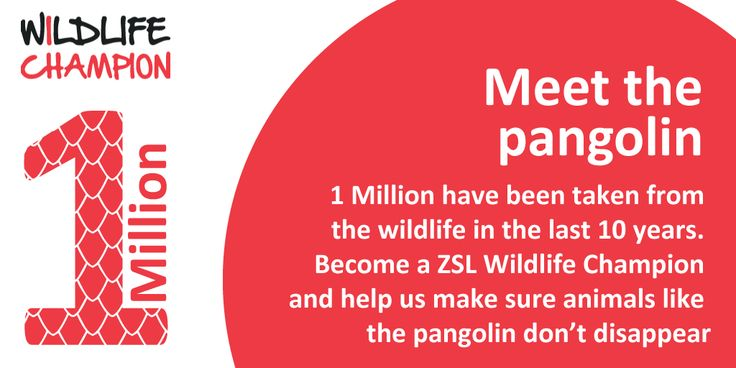 Help us protect animals like the pangolin by joining #ZSLChampions www.zsl.org/champions