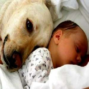 Might be helpful someday..How to Introduce Your New Baby to Your Dog & Helping a Pet Adjust to the Newborn | Good Evening World