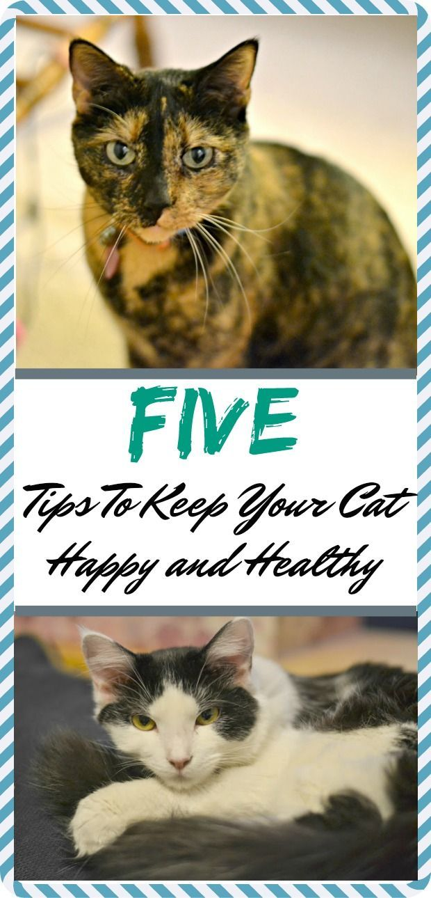 Best Cat Health Tips Images On Pinterest Cats Arthritis And - Meatball the fat cat kept eating everyones food so his owners came up with a clever solution
