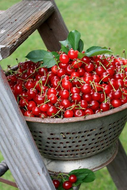 cherries...summer delights at Grandma's...next comes one of her delicious cherry pies!
