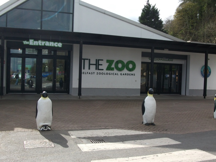 Belfast zoo this zoo has a wonderful petting zoo for kids