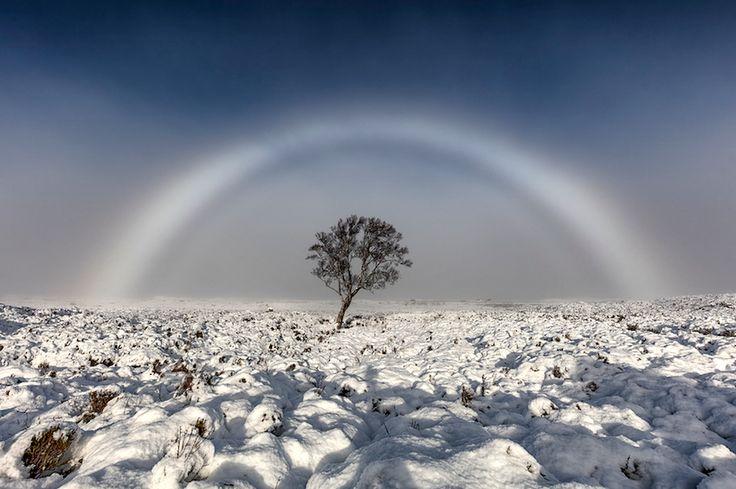英スコットランド西部のラノック原野で20日、白い虹に見える「霧虹」の見事な様子が撮影された。写真家のメルビン・ニコルソンさんが原野で撮影していたところ、「信じられないほど美しい」白い虹が出現したという。「霧を作る細かい水滴が集まった、無色の虹」だとニコルソンさんは説明。「目にするのは素晴らしいことで、普通は自分が太陽を背にしていないと見られない」という。