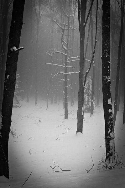 winter forest snow trees tree cold ice icy mystery mysterious