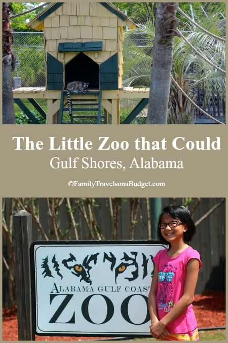 The Alabama Gulf Coast Zoo, aka the Little Zoo that Could, makes a great family outing in Gulf Shores. Learn more at http://familytravelsonabudget.com/attractions/little-zoo-that-could/ 