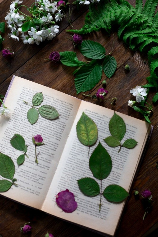 Preserve your garden by drying leaves and flowers. Learn how to use dried plants while crafting to create bouquets, framed flowers, cards, tea, wreaths and plenty more! Click in for the complete guide, courtesy of Garden Therapy.