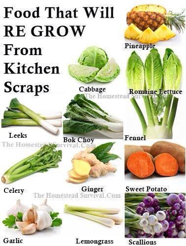 Plants to grow from kitchen scraps