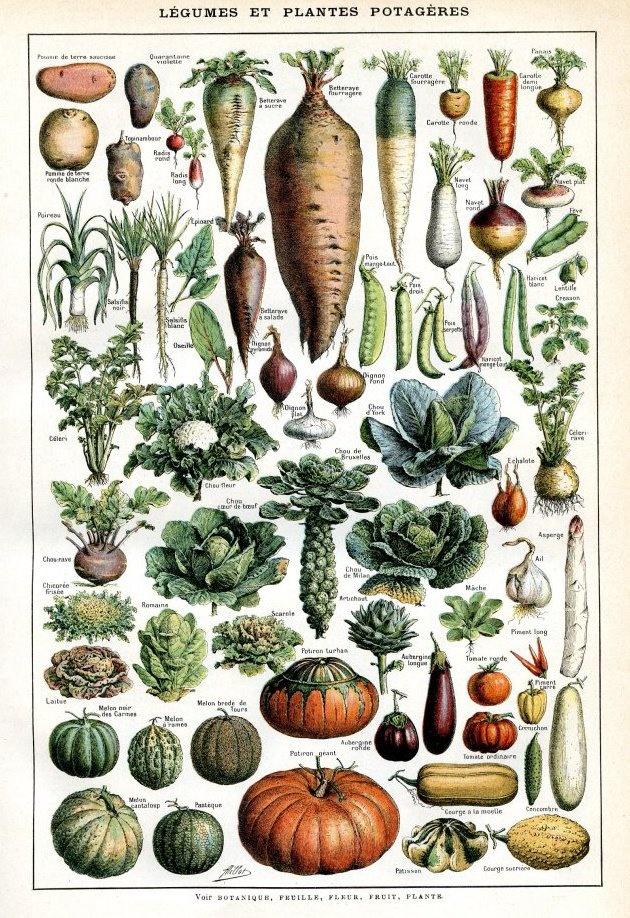 groenten om na te schilderen